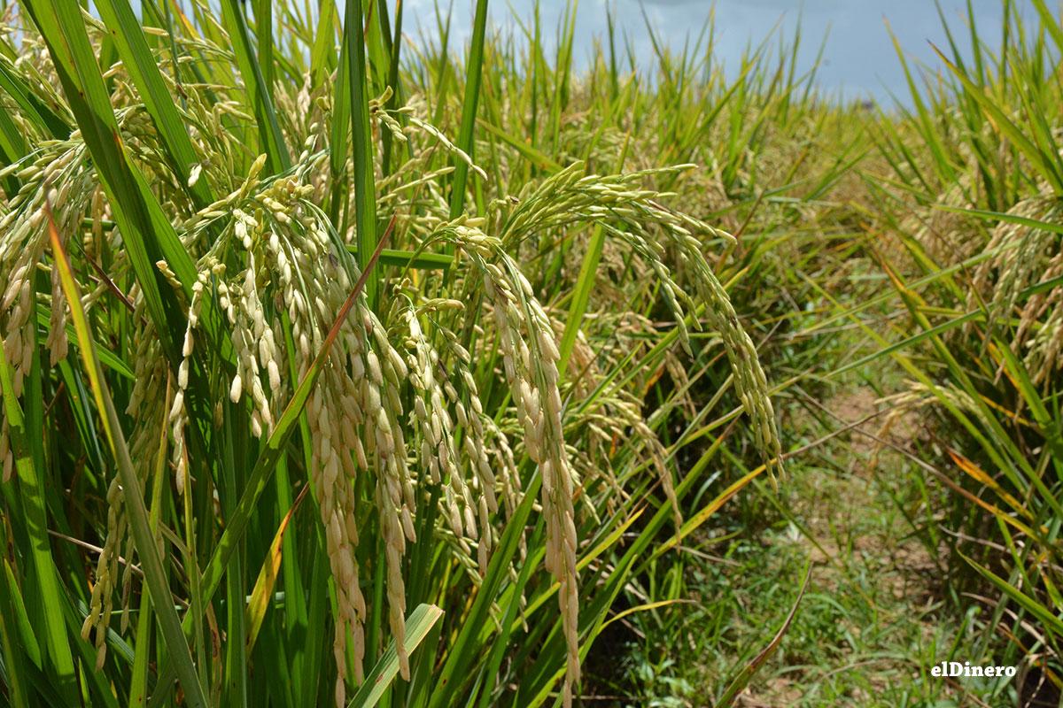 ruta-turistica-de-arroz